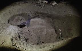 Sukamade - Turtle Hatchery
