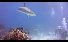 Lemon Sharks and Other Critters