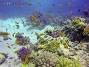 Underwater Footage Of Thailand