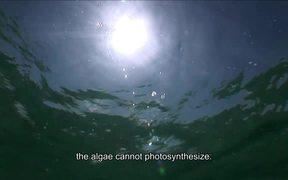 Biscayne National Park: Coral Reefs