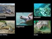 Biscayne National Park: Protecting Sea Turtles