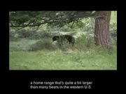 Rocky Mountain National Park: Bears