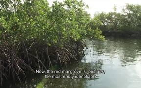 Biscayne National Park: Mangrove Forest