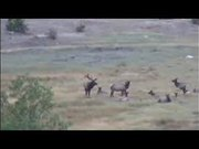 Rocky Mountain National Park:The Season of the Elk