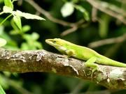 A Lizard's Life