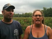 Local Heroes - Heirloom Tomato King And Queen
