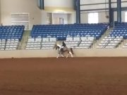 Tobiano Half-Hunter Pleasure Gelding Arabian