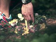 Love Story (Misty Forest)