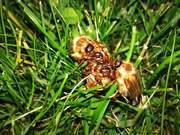 Flight Of The June Bugs
