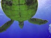 Extreme Underwater Test