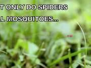 A Little Bugs