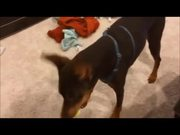 Unbroken: My Lovely Doberman
