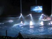 Show With Shirahama Dolphins