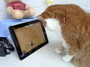 Beegie Meets the iPad Game for Cats