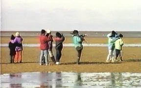 Amazing Journey Of The Migrating Shorebirds