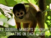 Top 5 Amazing Monkey Facts