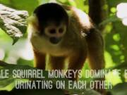 Top 5 Amazing Monkey Facts