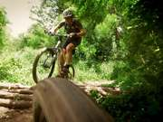 Race In The Forest