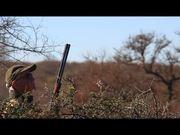 Dove Hunt Argentina