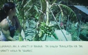 The Humble Cuadrado - The Jack Of All Bananas