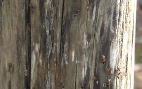 The Tiny Ants