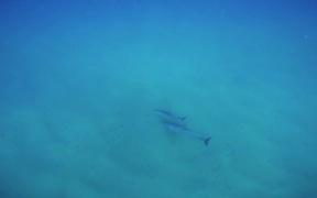 Dolphin Diary 2