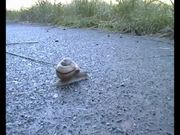 Snail Speed