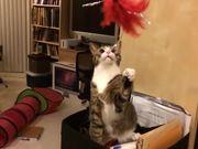 Slow-Mo Cats