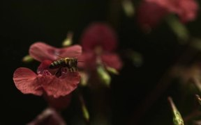 Honey Bee Takes Off