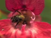 Bees Taking Off