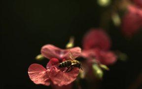 Bee in Ultra Slow Motion
