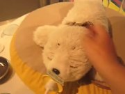 Little Robot Seal Plush