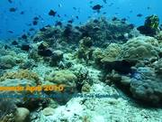 Canon 7D Underwater Video