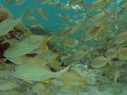 Madinina Underwater