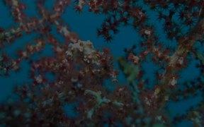 Reefs of Raja Ampat
