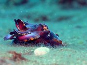 Aliens of the Lembeh Strait