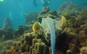 Scuba Diving - Koh Tao