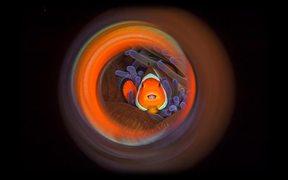 2017 Underwater Photographer