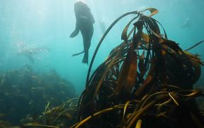 Seal Diving in Cape Town