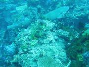 Underwater Cinematography Reel