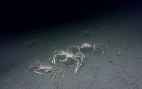It's a Crab's Life
