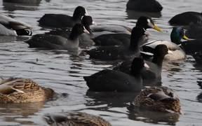 Birds Under Water