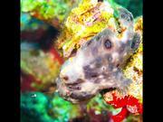 Underwater Slideshow