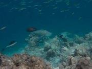 Maldives Royal Island Aerials