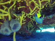 Cozumel Diving 2016