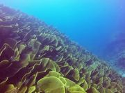 Underwater Marvels of Palau