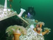 Underwater Boeing 737 Dive