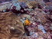 Diving in Watamu