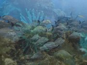 SeaLife Reel