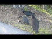 Everglades National Park: Cormorant Eating